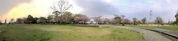 満開だった落合公園の桜(2019年4月7日) - 61:パノラマ