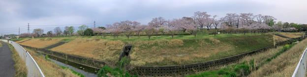 満開だった落合公園の桜(2019年4月7日) - 64:パノラマ.jpg