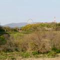 Photos: 木曽川沿いから見た木曽三川公園の大観覧車「オアシスホイール」 - 1