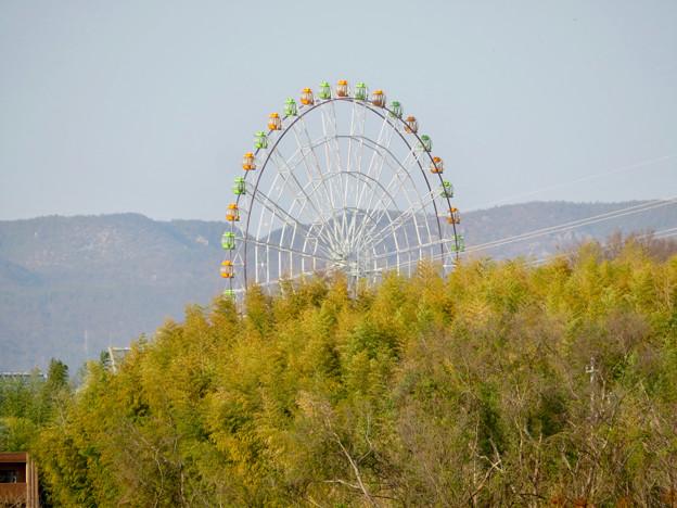 木曽川沿いから見た木曽三川公園の大観覧車「オアシスホイール」 - 2