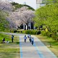 Photos: 光明寺公園の桜