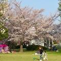 138タワーパークの桜 - 2