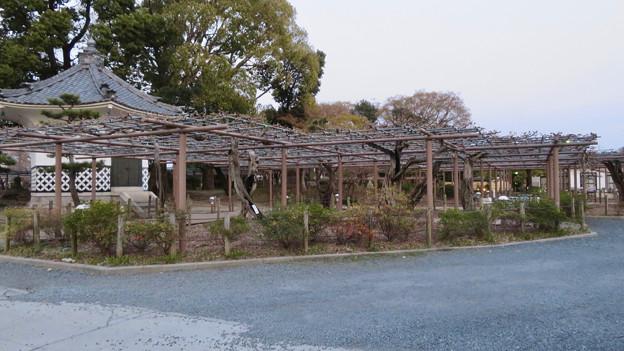シーズンオフの曼陀羅寺公園 - 2:藤棚