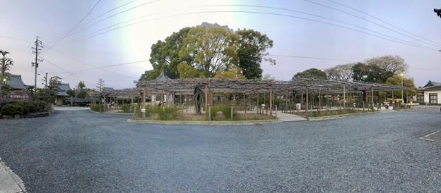 シーズンオフの曼陀羅寺公園 - 4:藤棚(パノラマ)