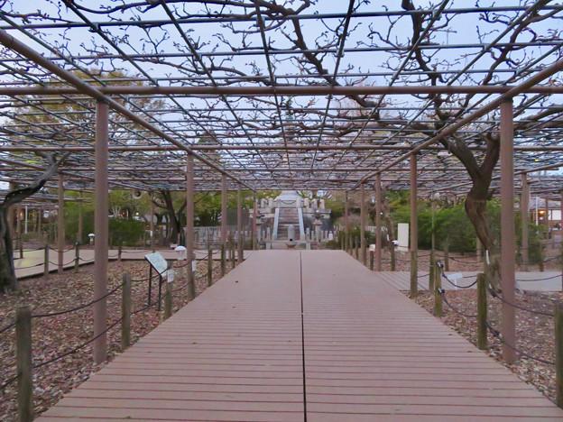 シーズンオフの曼陀羅寺公園 - 11:藤棚