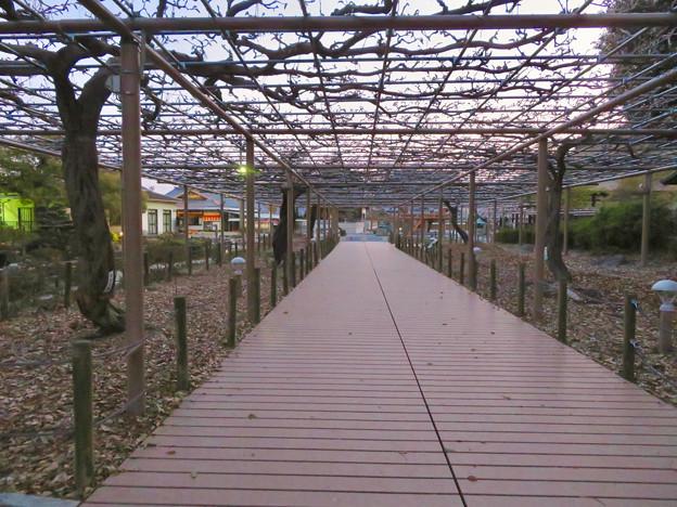 シーズンオフの曼陀羅寺公園 - 12:藤棚