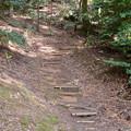 Photos: 東谷山山頂への道 - 13:山頂の尾張戸神社への近道?