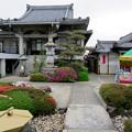 Photos: 修造院 - 3:江南藤まつり開催中の修造院(嫁見餅の販売)