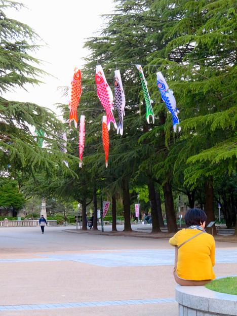 鶴舞公園の鯉のぼり - 4