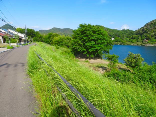 木曽川沿いの絵になる木の立つ場所 - 1