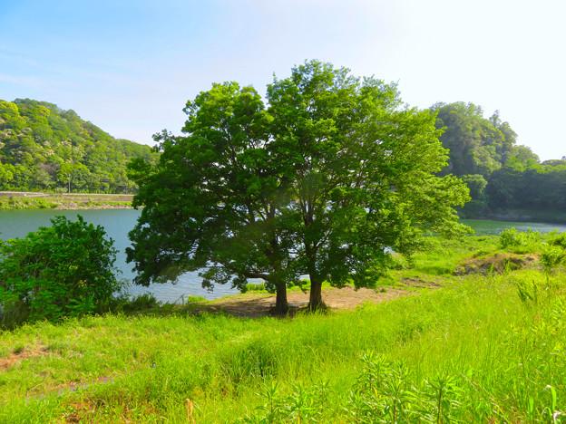 木曽川沿いの絵になる木の立つ場所 - 3