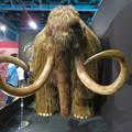 Photos: 名古屋市科学館「絶滅動物研究所」展 No - 6:ケナガマンモスのリアル模型