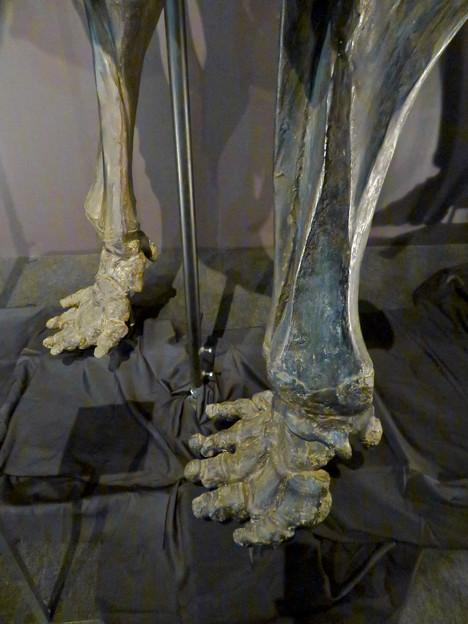 名古屋市科学館「絶滅動物研究所」展 No - 11:マンモスの骨格標本