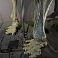 Photos: 名古屋市科学館「絶滅動物研究所」展 No - 11:マンモスの骨格標本