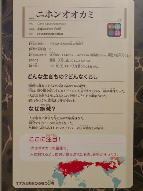 名古屋市科学館「絶滅動物研究所」展 No - 86:ニホンオオカミの説明