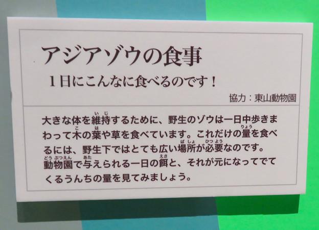 Photos: 名古屋市科学館「絶滅動物研究所」展 No - 137:アジアゾウが一日に食べる量の説明