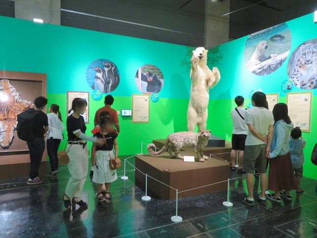 名古屋市科学館「絶滅動物研究所」展 No - 141