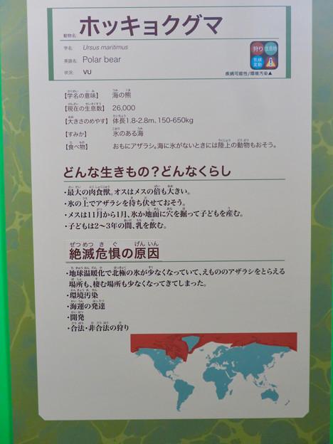 名古屋市科学館「絶滅動物研究所」展 No - 151:ホッキョクグマの説明