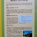 名古屋市科学館「絶滅動物研究所」展 No - 154:動物たちの食事について