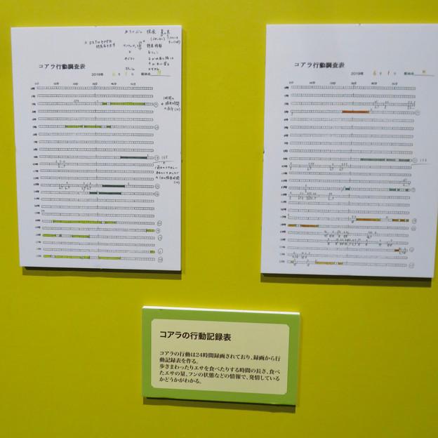 名古屋市科学館「絶滅動物研究所」展 No - 158:ゴリラの行動記録