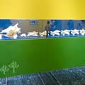 Photos: 名古屋市科学館「絶滅動物研究所」展 No - 159:アミメキリンの骨