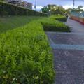 Photos: 桃花台線の桃花台中央公園南側撤去工事(2019年7月26日):より良くしようとしない愛知県が不便な歩道を復元 - 15
