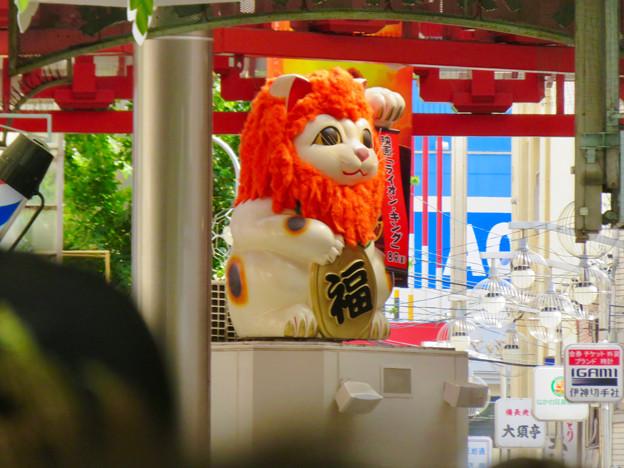 大須商店街:映画「ライオンキング」PRのためライオンになってた招き猫広場の招き猫 - 1