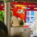Photos: 大須商店街:映画「ライオンキング」PRのためライオンになってた招き猫広場の招き猫 - 1