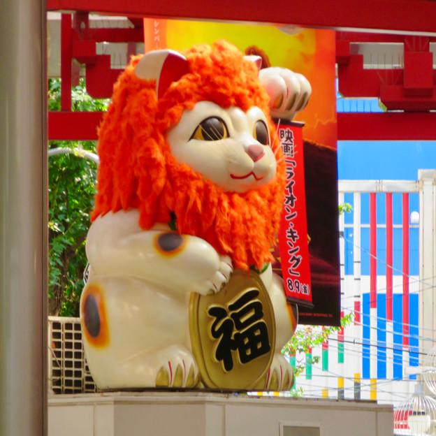 大須商店街:映画「ライオンキング」PRのためライオンになってた招き猫広場の招き猫 - 3