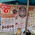 Photos: 大須タピオカサミット 2019 No - 7:招き猫広場の投票所