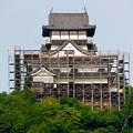 天守保蔵工事中の犬山城(2019年8月18日) - 27