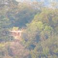 Photos: ライン大橋の上から見た鵜沼城跡の岩山 - 3:頂上部の平たくなってる部分?とアンテナ