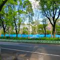 Photos: リニューアル工事中の久屋大通公園北側(2019年8月25日) - 2