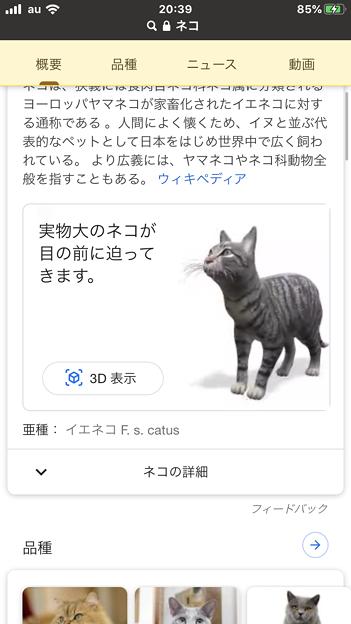 Google検索結果から3Dオブジェクトの猫などの動物がAR表示可能に! - 1