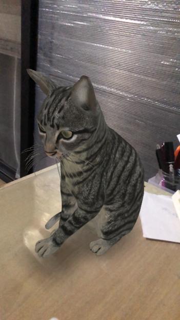 Google検索結果から3Dオブジェクトの猫などの動物がAR表示可能に! - 3