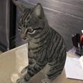 Photos: Google検索結果から3Dオブジェクトの猫などの動物がAR表示可能に! - 3