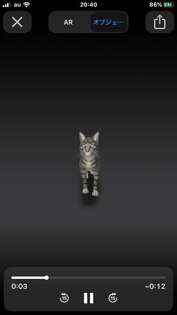 Google検索結果から3Dオブジェクトの猫などの動物がAR表示可能に! - 4