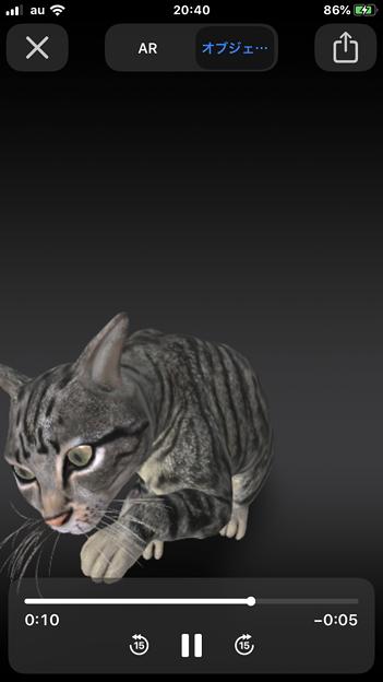 Photos: Google検索結果から3Dオブジェクトの猫などの動物がAR表示可能に! - 5