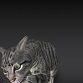 Google検索結果から3Dオブジェクトの猫などの動物がAR表示可能に! - 5