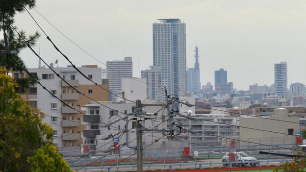 椙山女学園大学 星が丘キャンパス No - 39:キャンパス内から見えた名古屋テレビ塔とNTTドコモ名古屋ビル