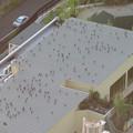 Photos: 上から見るとアリの様にカラスが集まっていた、夕暮れ時のゴリラ・チンパンジー舎の屋根の上 - 1