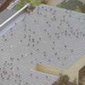 Photos: 上から見るとアリの様にカラスが集まっていた、夕暮れ時のゴリラ・チンパンジー舎の屋根の上 - 2