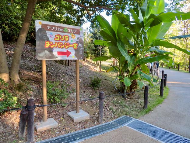 東山動植物園:ゴリラ・チンパンジー舎の案内板 - 1