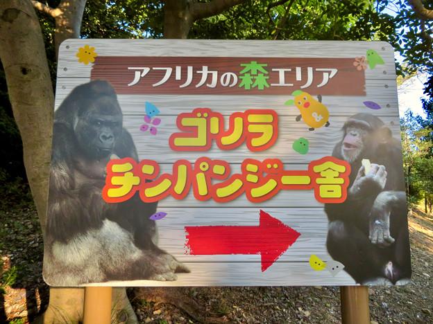 東山動植物園:ゴリラ・チンパンジー舎の案内板 - 2