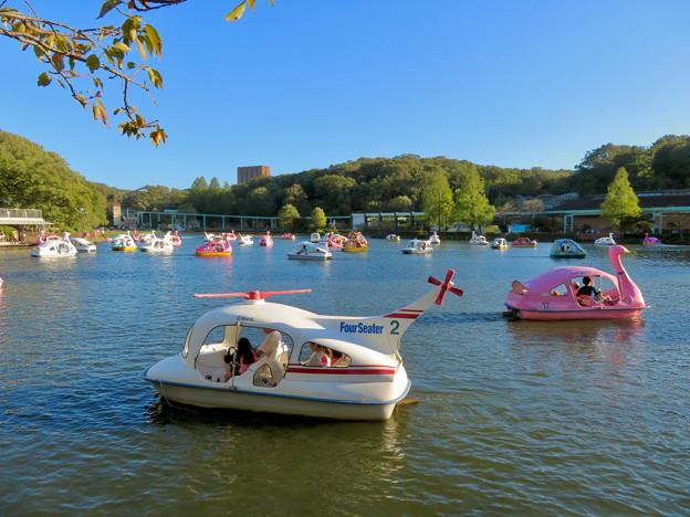 東山動植物園:沢山のボートが出ていた秋の上池