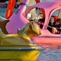 Photos: 東山動植物園:黄金のコアラのペダルボート - 2