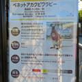 Photos: 東山動植物園:ベネットアカクビワラビー - 1(説明)