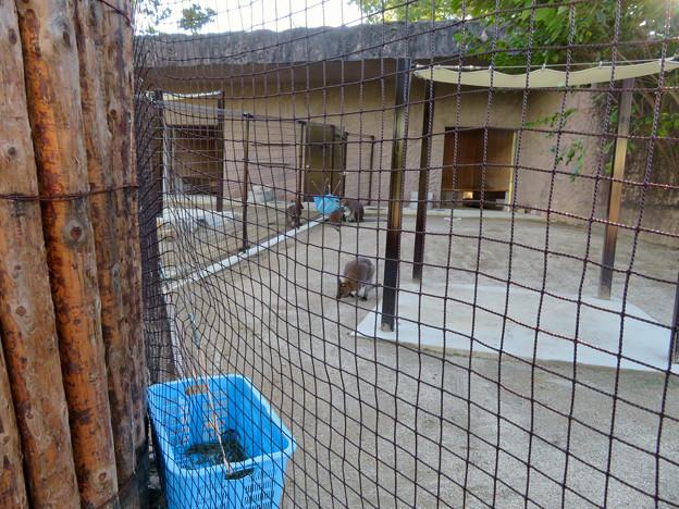 東山動植物園:新しくなったワラビー&カンガルー舎 - 3
