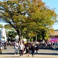 Photos: 東山動植物園(2019年10月) - 3:大勢の人で賑わう台風一過の秋の園内