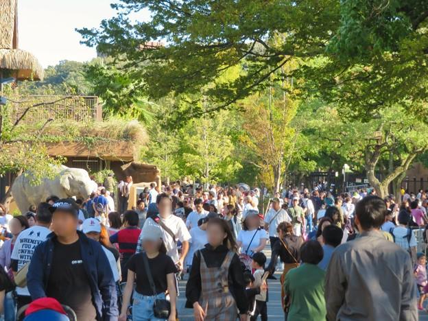 東山動植物園(2019年10月) - 4:大勢の人で賑わう台風一過の秋の園内